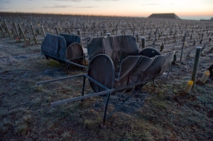 Frosted brouettes in Les Perrieres at Aloxe-Corton