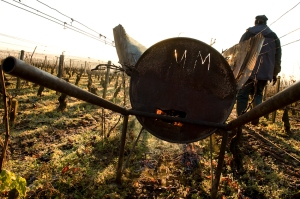 Burning prunings in the Hopsices de Beaune Bressandes