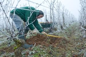 Preparing ground in Corton Grèves for new vines