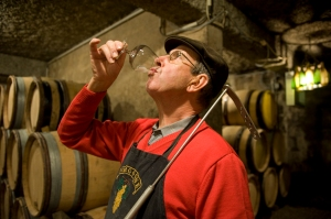 Jean-François checking the malolactic fermentation of his 2013 Charlemagne
