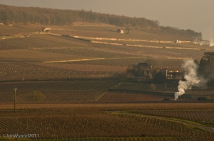 A peaceful morning on the Ladoix side of the Hill as seen from Aloxe-Corton