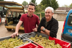 Gregory and his father Pierre pleased with enough grapes for a barrel of Côte de Nuits white.