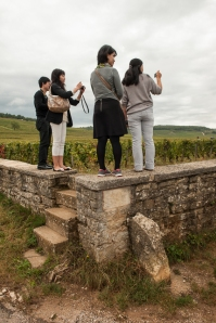 The visitors are more visible than the pickers at Romanée Conti but none dare cross the wall !