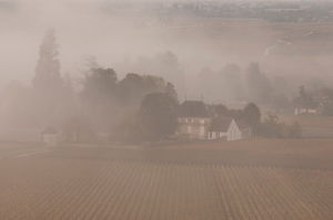 Mist at Aloxe-Corton