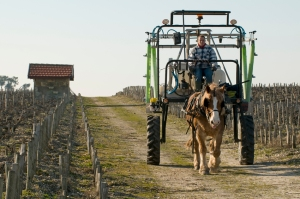Tesseron wants all the vineyard work done by horses and is having equipment made especially for different jobs.