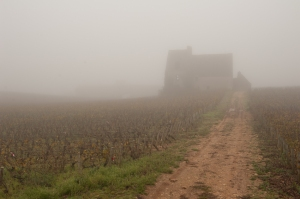 Mist at Morgeot