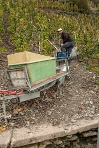A monaorail for transporting grapes down the Mosel's steep slopes. I used to be an ambition to ride on one of those. Not any more !