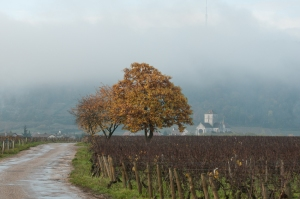 Low cloud over  Nuits St Georges