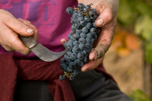 A nice handful of Mencia
