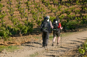 Pilgriming through the vineyards of Bierzo