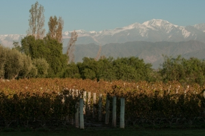 Vines and mountains, Argentinian style.