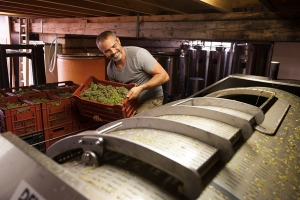 Julien Pilion loads his Viognier in Condrieu
