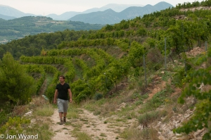 Nicolas's Malmont vineyard,near Seguret, all his own work - watch this space !