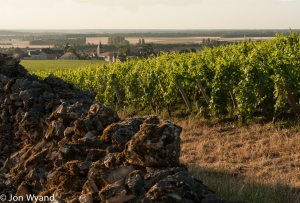 Cros Parantoux at Vosne-Romanée and a wall of rocks Henri Jayer cleared from the vineyard himself.