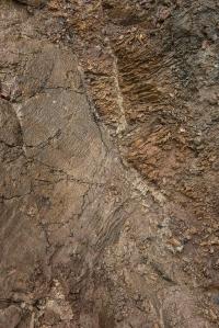 Volcanic rock cut through this schist 60 million years ago !