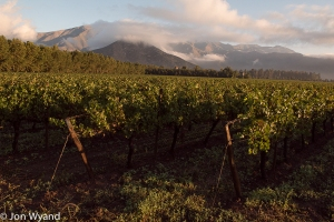 First light at Errazuriz on day 2