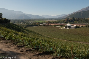 A last look at Errazuriz, for a while....