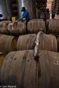 Filling barrels@ Errazuriz.