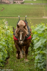 A Breton from Champagne working in Burgundy - small world.