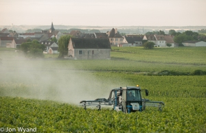 Spraying at Puligny Clavaillon.