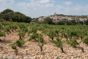 Chateauneuf du Pape with its trademark stones.