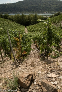 Seyssuel vineyard near Vienne