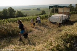 Dancer's crew off to pick Clos du Tête in Chassagne